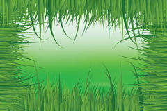 Green meadow in fresh grass frame Stock Image