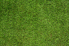 Green meadow grass field Royalty Free Stock Image