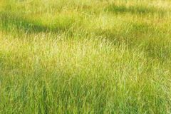 Green meadow grass field softly morning light stock photo
