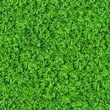 Green Meadow Grass. Seamless Texture. Stock Photo