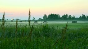 Green meadow with grass and trees in mist at sunset. Spring time. Panning motion camera. Pink sunset blurred background. Green grass meadow. Sunset on horizon stock video