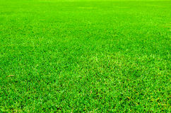 Green Meadow. A green grassy field area Stock Photography