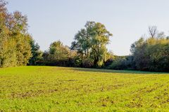 Green meadow with green leafy trees background. Wonderful sunny day in Beek south Limburg the Netherlands Holland royalty free stock photography