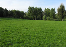 Green meadow with grove Stock Images