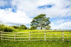 Green meadow in Hawaii Stock Photo