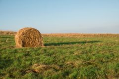 Green meadow with hay harvested in the mountains in the morning at sunrise Royalty Free Stock Images