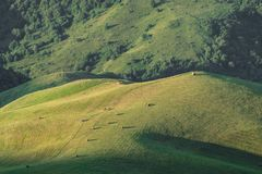 Green meadow with hay harvested in the mountains in the morning at sunrise Stock Photo