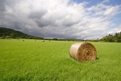 Green meadow and haycock. Grass field in middle Europe, Czech Republic Royalty Free Stock Image