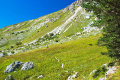 Green meadow in highlands Royalty Free Stock Image