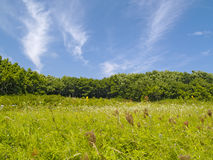 Green meadow on a hill slope Royalty Free Stock Photography