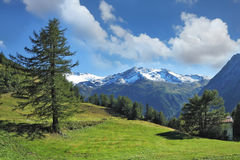 Green meadow on a hillside and pine forests royalty free stock photo