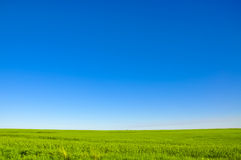 Green meadow horizon and blue sky. A vivid image of a meadow in the blue sky Stock Photography