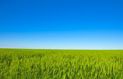 Green meadow horizon and blue sky Royalty Free Stock Images