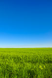 Green meadow horizon and blue sky Stock Photography