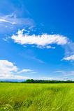 Green meadow horizon and blue sky Stock Image