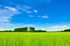 Green meadow horizon and blue sky Royalty Free Stock Photos