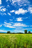 Green meadow horizon and blue sky Stock Photo