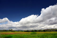 Free Green Meadow In Blossom Under Beautiful Sky Royalty Free Stock Image - 7236816