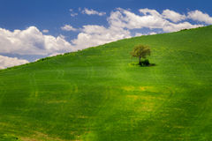 Green meadow and lonely tree Royalty Free Stock Photo