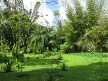 A green meadow. In Mauritius National Botanical Garden royalty free stock photography