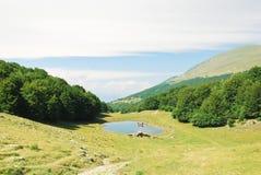 Green meadow in Monte Baldo mountains Royalty Free Stock Image