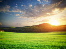 Green meadow in mountain. Stock Photos