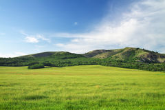Green meadow in mountain. Royalty Free Stock Photos