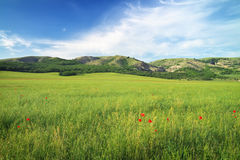 Green meadow in mountain. Royalty Free Stock Photo