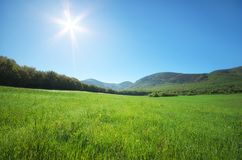 Green meadow in mountain royalty free stock image