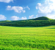 Green meadow in mountain Stock Photography