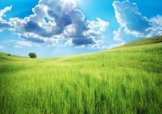 Green meadow in mountain. Stock Photos
