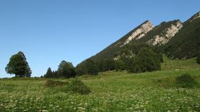 Green meadow and mountain peaks Royalty Free Stock Photography