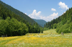 Green meadow in mountain valley Royalty Free Stock Images