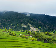 Green meadow in mountain village. Royalty Free Stock Photography