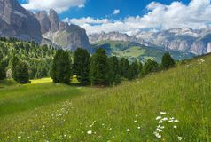Green meadow with mountains on backgound, the Dolomites royalty free stock image