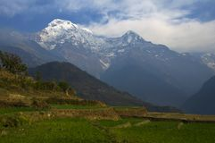 Green meadow and mountains. Trekking to Annapurna Base Camp. Nepal stock images
