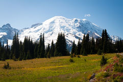 Green meadow at Mt. Rainier Stock Photo