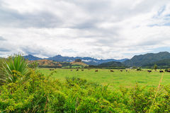 Green meadow in New Zealand Stock Photo