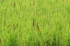 Green meadow Stock Image
