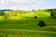 The green meadow Stock Image