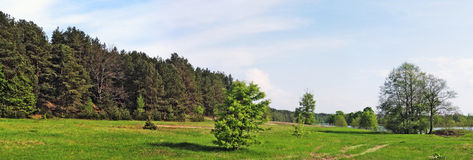 Green meadow and pine forest Stock Images