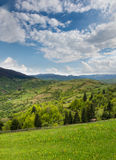 Green meadow and pine forest in the Carpathian Mountains away. Royalty Free Stock Images