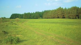 Green meadow and pine forest stock video footage