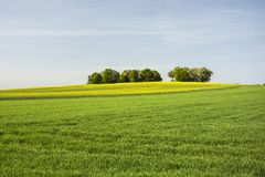 Green meadow, field and small forest. Horizon and sky stock photography