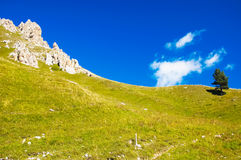 Green meadow and rock Royalty Free Stock Images