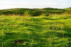 Green meadow in scotland. Green meadow with small brown flowers in scotland Royalty Free Stock Photos
