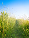 Green meadow shined with sun Royalty Free Stock Photos