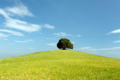 Green meadow and single tree Royalty Free Stock Photos