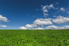 Green meadow and sky with clouds Royalty Free Stock Photo