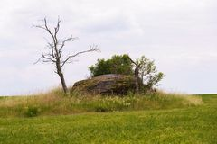 Green meadow with solitary stone and dry tree. Green meadow with solitary stone and dry tree in summer day stock images